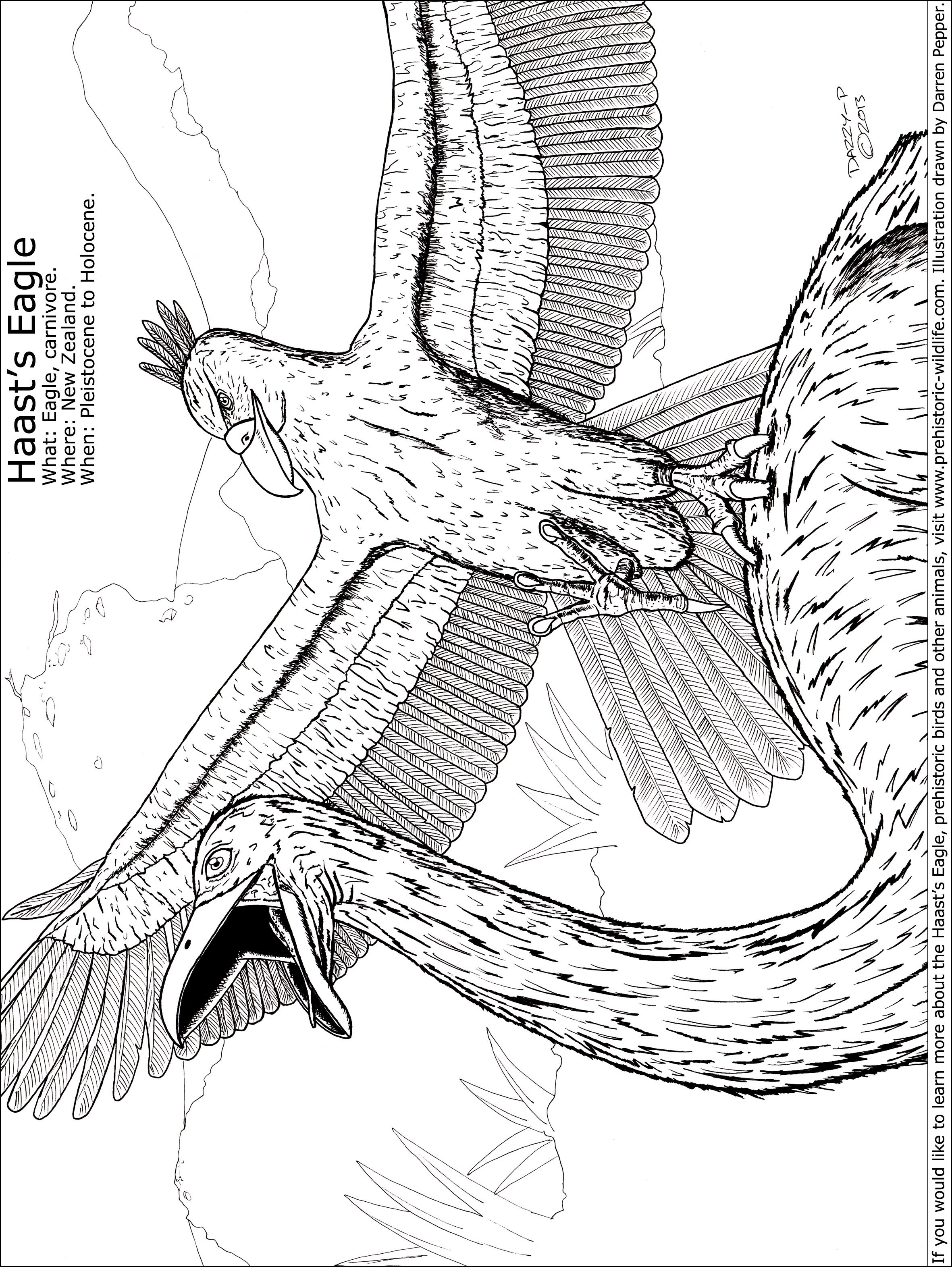 haast u0027s eagle