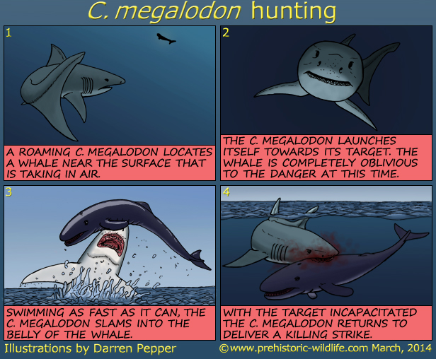 All Your Megalodon Shark Facts And Stats Are Here  Shark