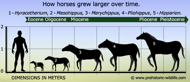 Evolution of a Horse on emaze