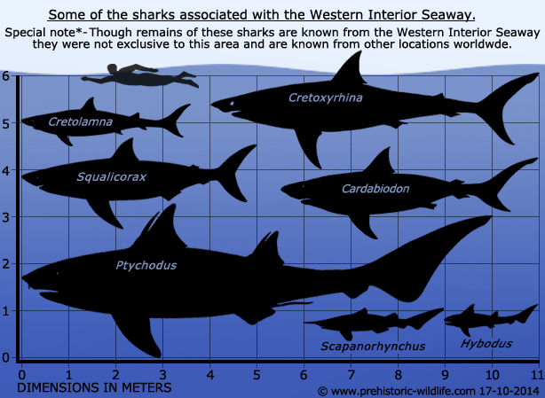 sharks-of-the-western-interior-seaway.jpg