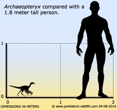 Archaeopteryx - Wikipedia