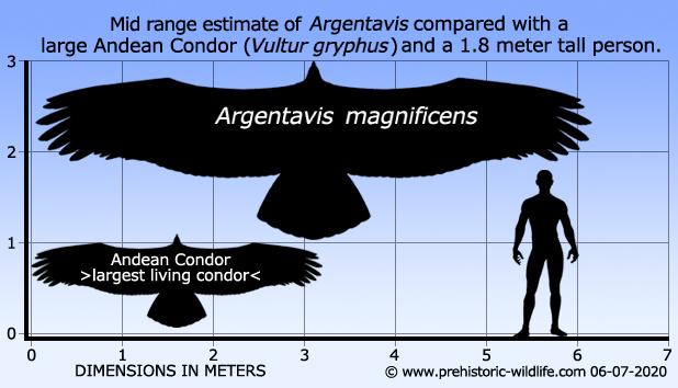 http://www.prehistoric-wildlife.com/images/species/a/argentavis-size.jpg