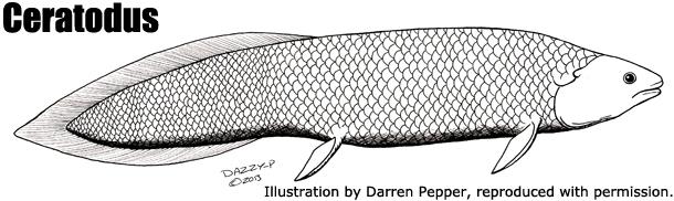ceratodus - źródło: http://www.prehistoric-wildlife.com