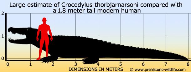 Pics For > Titanoboa Size Comparison