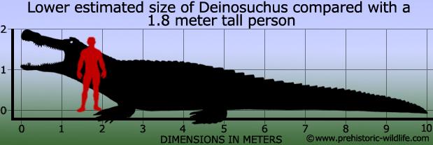 Image result for paleocene crocodiles - Deinosuchus skeleton
