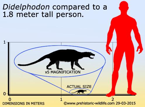 didelphodon-size.jpg