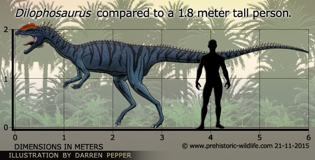 Image result for dilophosaurus size