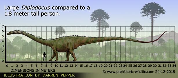 Perbandingan Manusia dengan Diplodocus