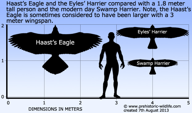 [Image: haast%27s-eagle-and-eyles-harrier-size.jpg]