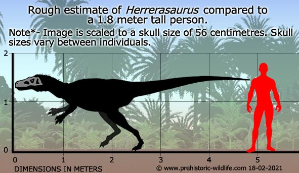 10 Dangerous Prehistoric Birds