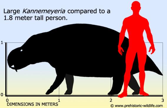 Resultado de imagen de kannemeyeria