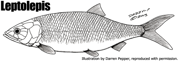 Top 10 prehistoric fish for Types of bony fish