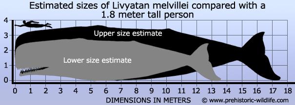 [Image: livyatan-size.jpg]