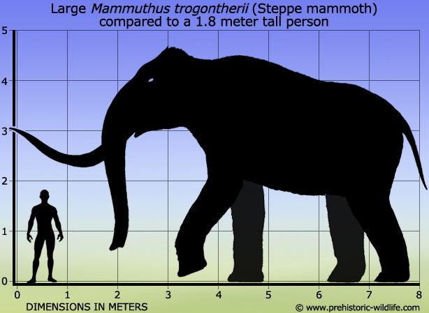 Cave Bear Size Comparison - 121.0KB