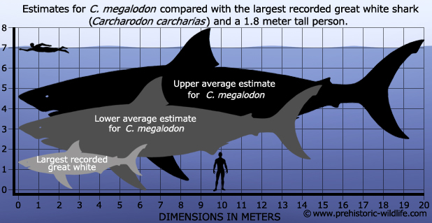 Megalodon vs Great White Shark Size