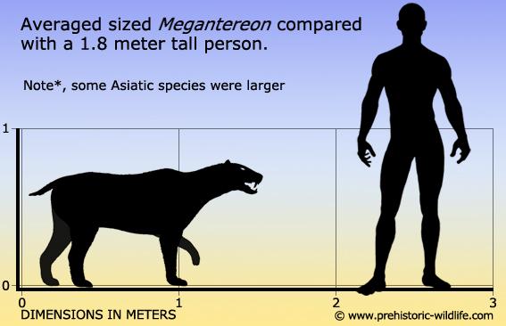 http://www.prehistoric-wildlife.com/images/species/m/megantereon-size.jpg