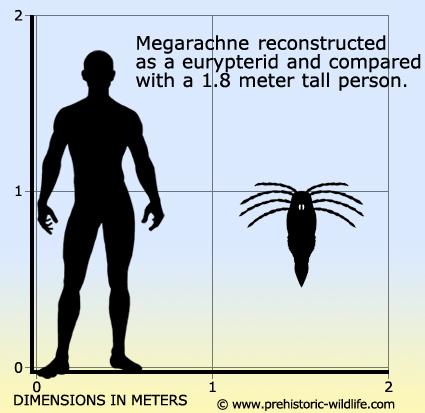 GIANT SPIDERS - WORMWOOD CHRONICLES