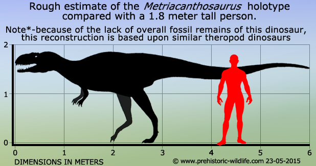 metriacanthosaurus-size.jpg