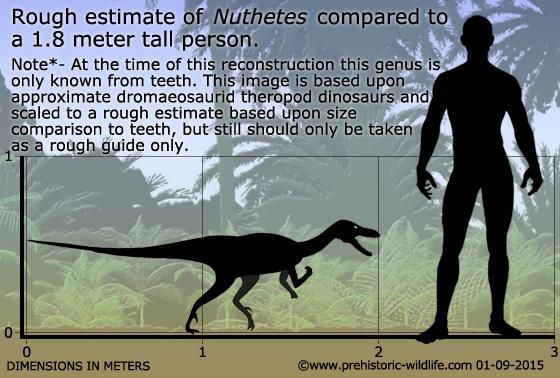 http://www.prehistoric-wildlife.com/images/species/n/nuthetes-size.jpg