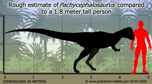 pachycephalosaurus-size.jpg