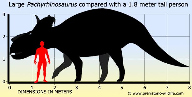 pachyrhinosaurus-size.jpg