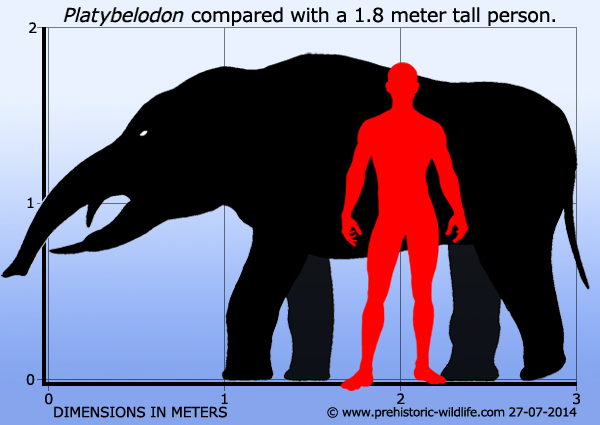 Platybelodon-danovi2-738x591.jpg
