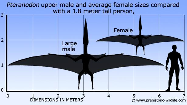 Pteranodon c0f0a89fd