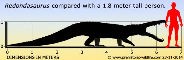 redondasaurus-size.jpg