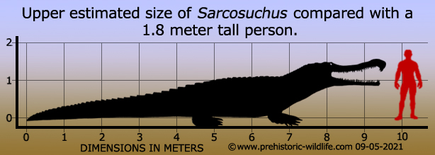 [Image: sarcosuchus-size.jpg]