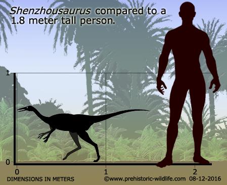 shenzhousaurus-size.jpg