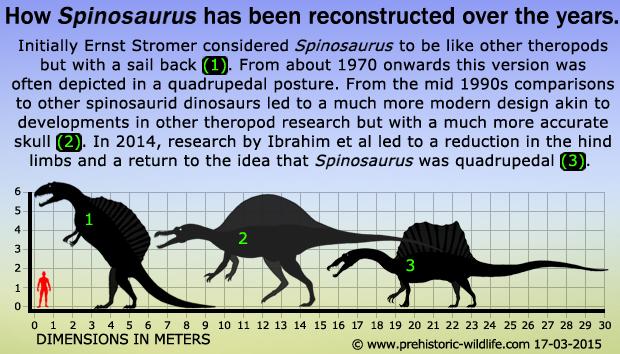 spinosaurus-at-various-times.jpg