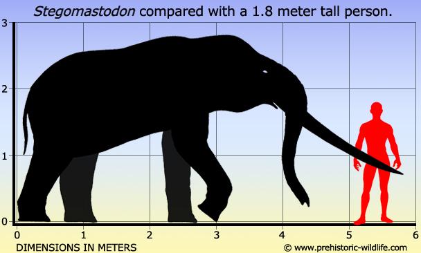 proboscidea stegomastodon