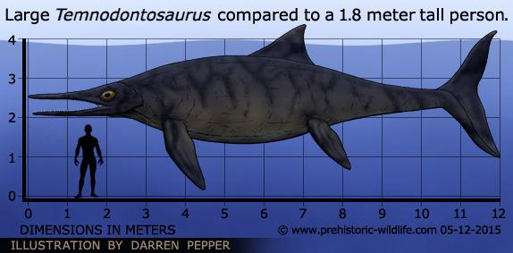 Temnodontosaurus ~ Informasi Unik Dan Keren  Temnodontosauru...