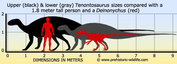 tenontosaurus-size.jpg