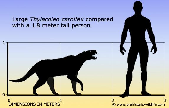 Top Ten Predatory Mammals