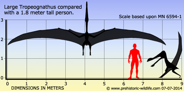 Large Tropeognathus compared with a 1.8 meter tall person