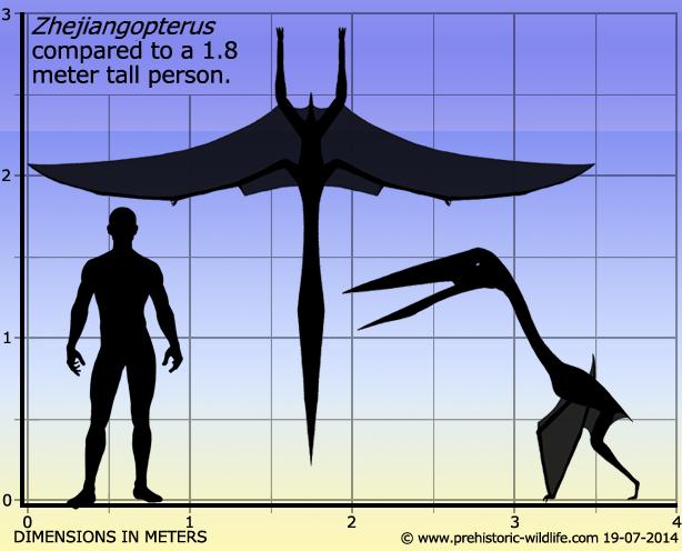 Hatzegopteryx Size Zhejiangopterus